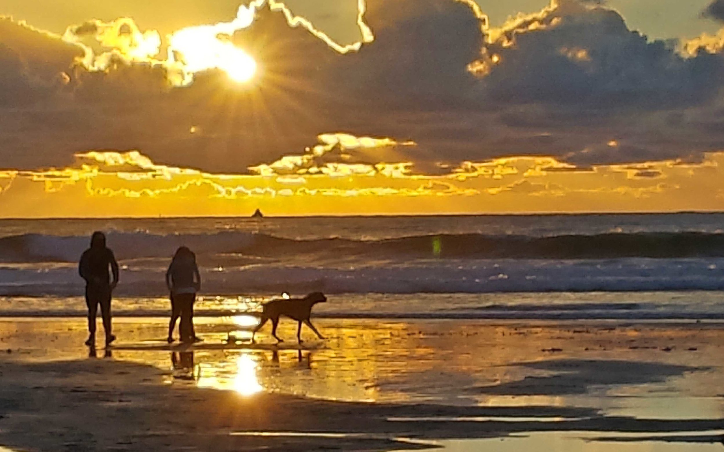 Dogs on vacation - every day at OB's Dog Beach.     Photo: (c) Barb Ayers, DogDiary.org
