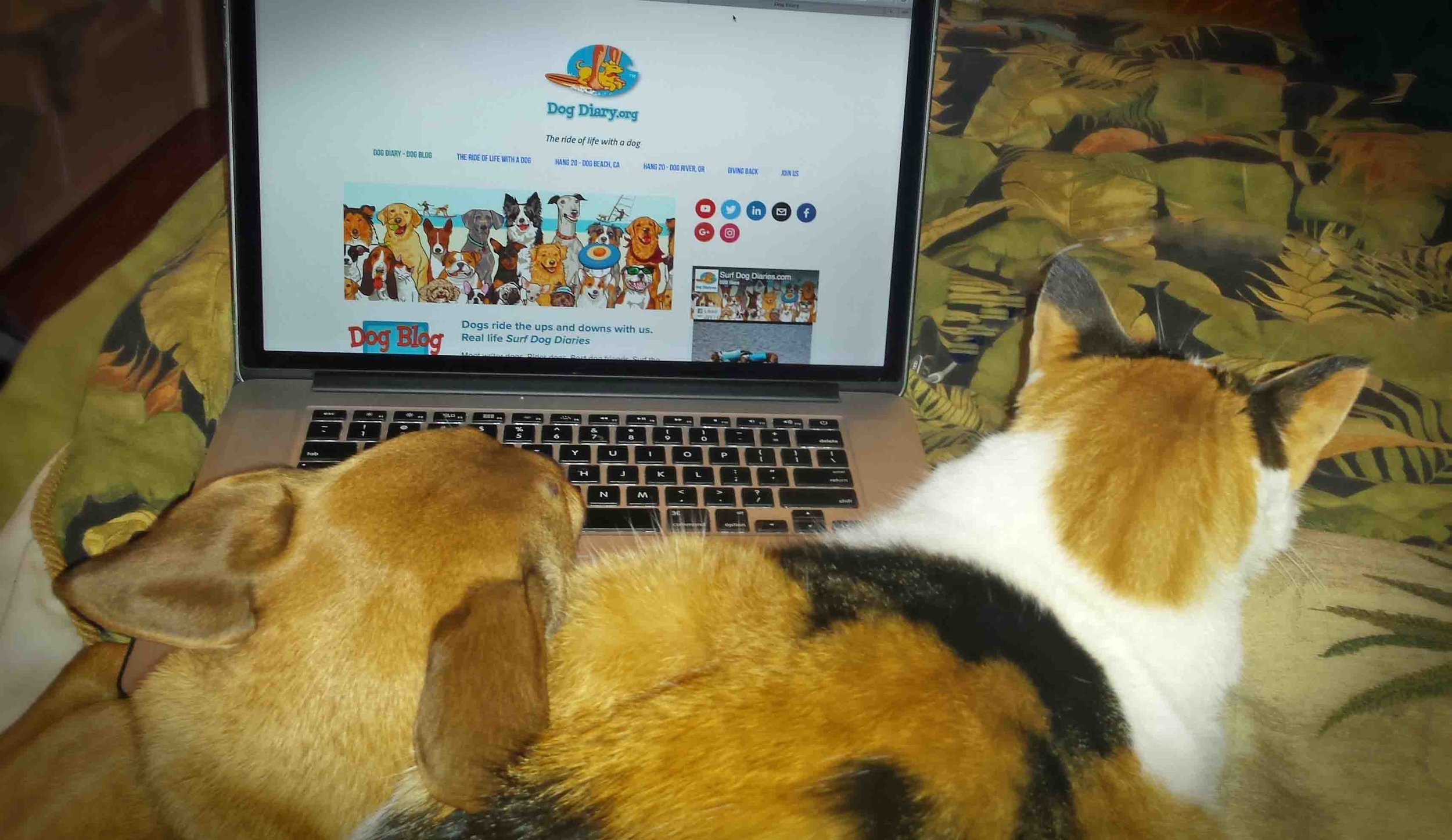 Dog Diarians Doodle 'n Tia hard at work in bed.   Photo: (c) Barb Ayers, DogDiary.org