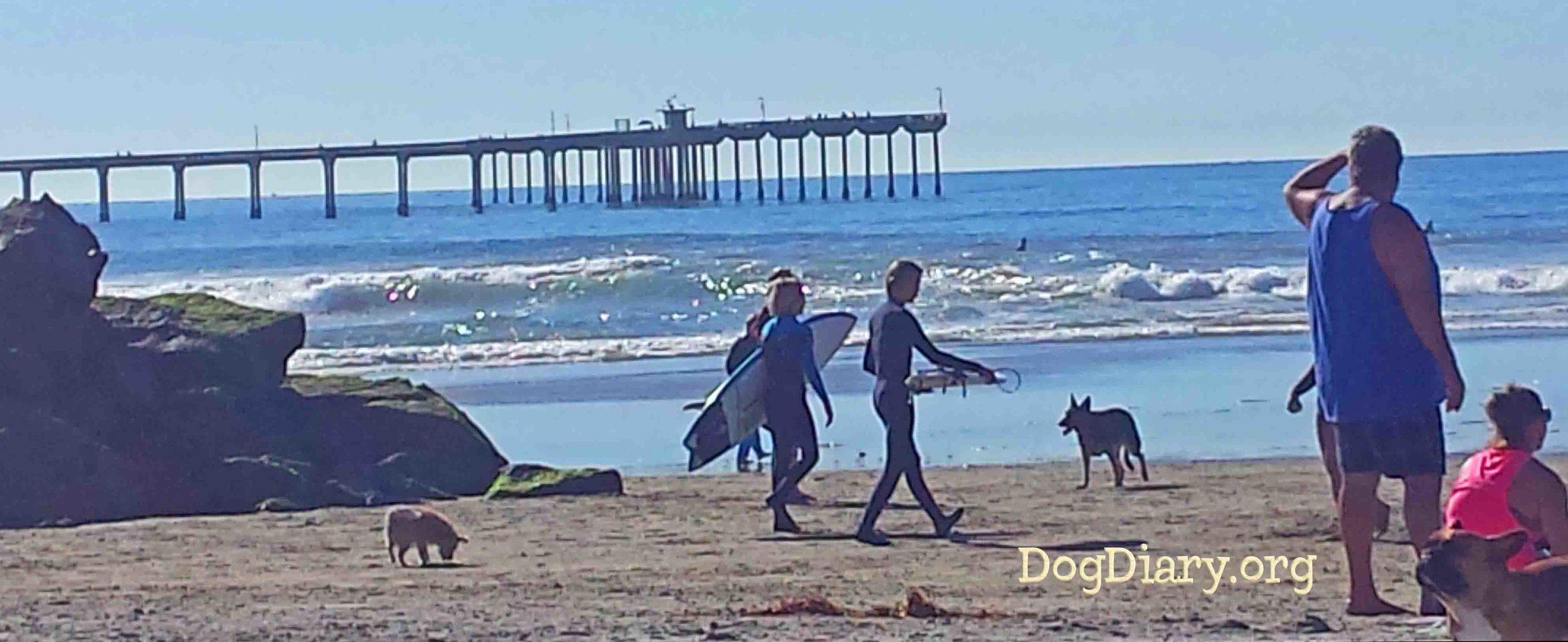 Dog Beach - in Ocean Beach, San Diego, CA. Where the Surf Dog Diaries first began.Photo: (c) Barb Ayers, DogDiary.org