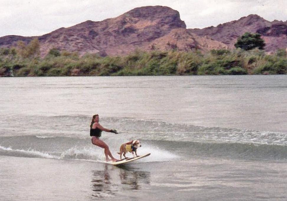 Howdy hangs 20 behind a ski boat with his mom when waves aren't around on the Colorado River.  Photo: (c) Barb Ayers, DogDiary.org