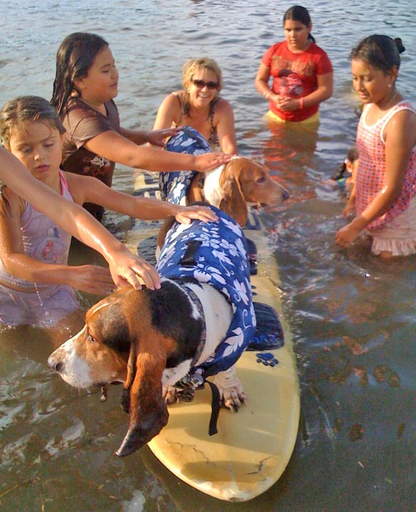 Click on photos for links to related stories.    Surf bassets Elvis n Dude n friends.  Photo: (c) Barb Ayers, DogDiary.org