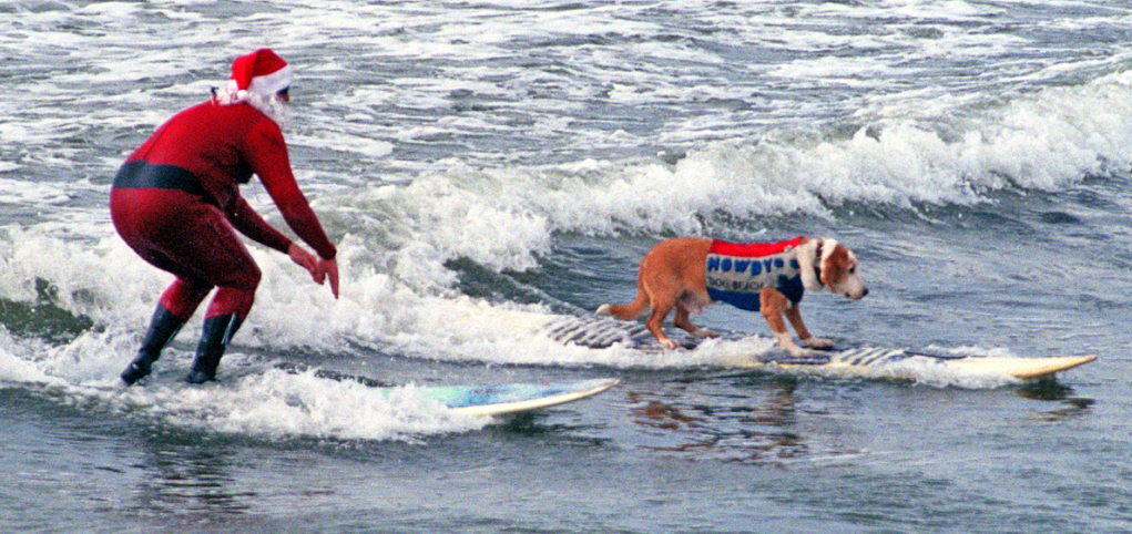 Howdy rode solo in surf - here, with a cool dude at the Dog Beach  Sandy Claws  fundraiser. Photo: (c) Barb Ayers, DogDiary.org  Click on photos for links to related stories