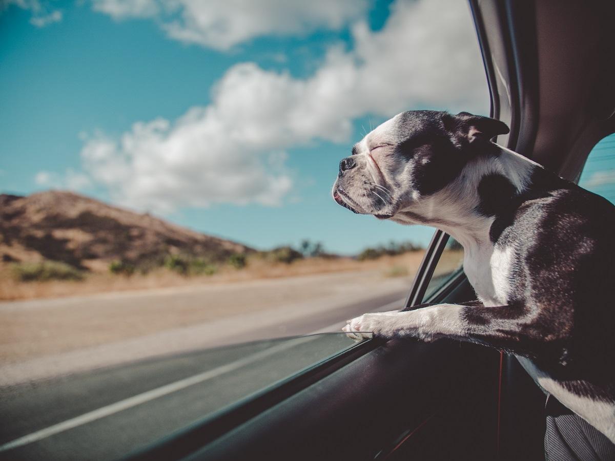 travels_dog.jpg