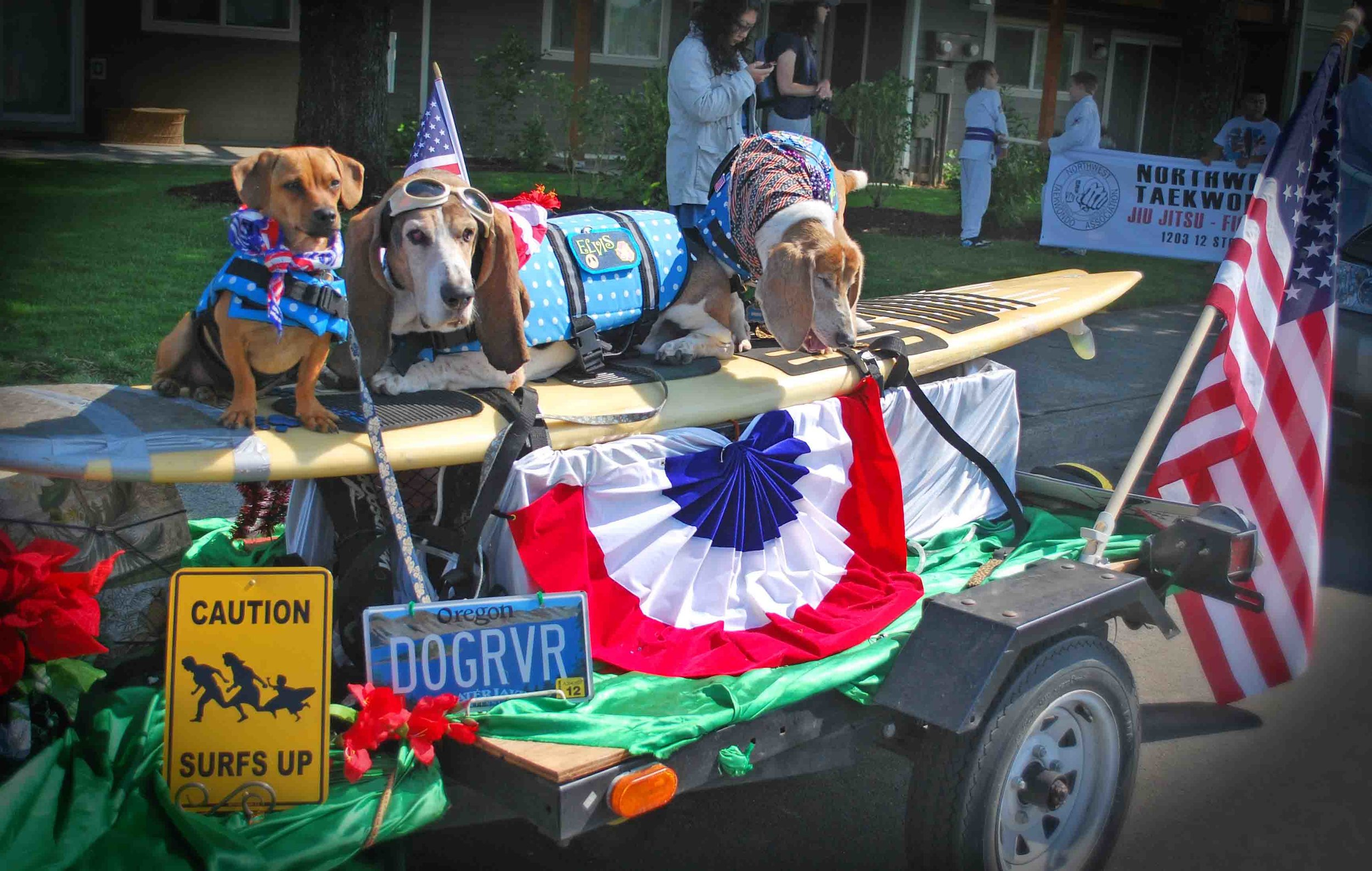 L to R: Doodle, Elvis, Dude. Hood River July 4 parade 2014.    Photo: (c) Barb Ayers, DogDiary.org