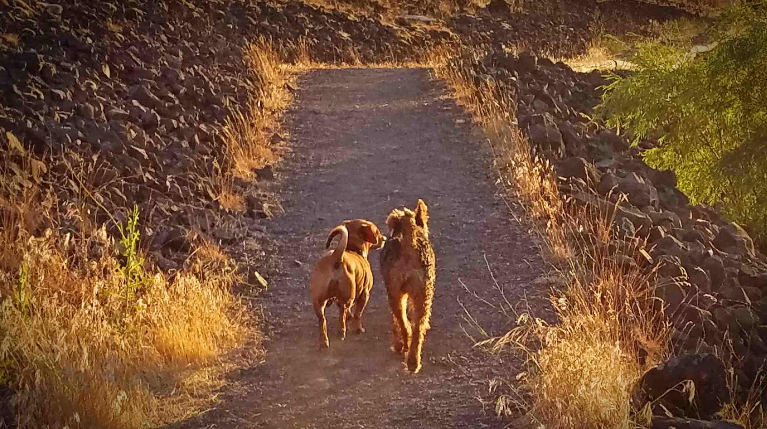 My dog son Doodle and his girlfriend Eloise on the Mosier trail. Photo: (c) Barb Ayers, DogDiary.org