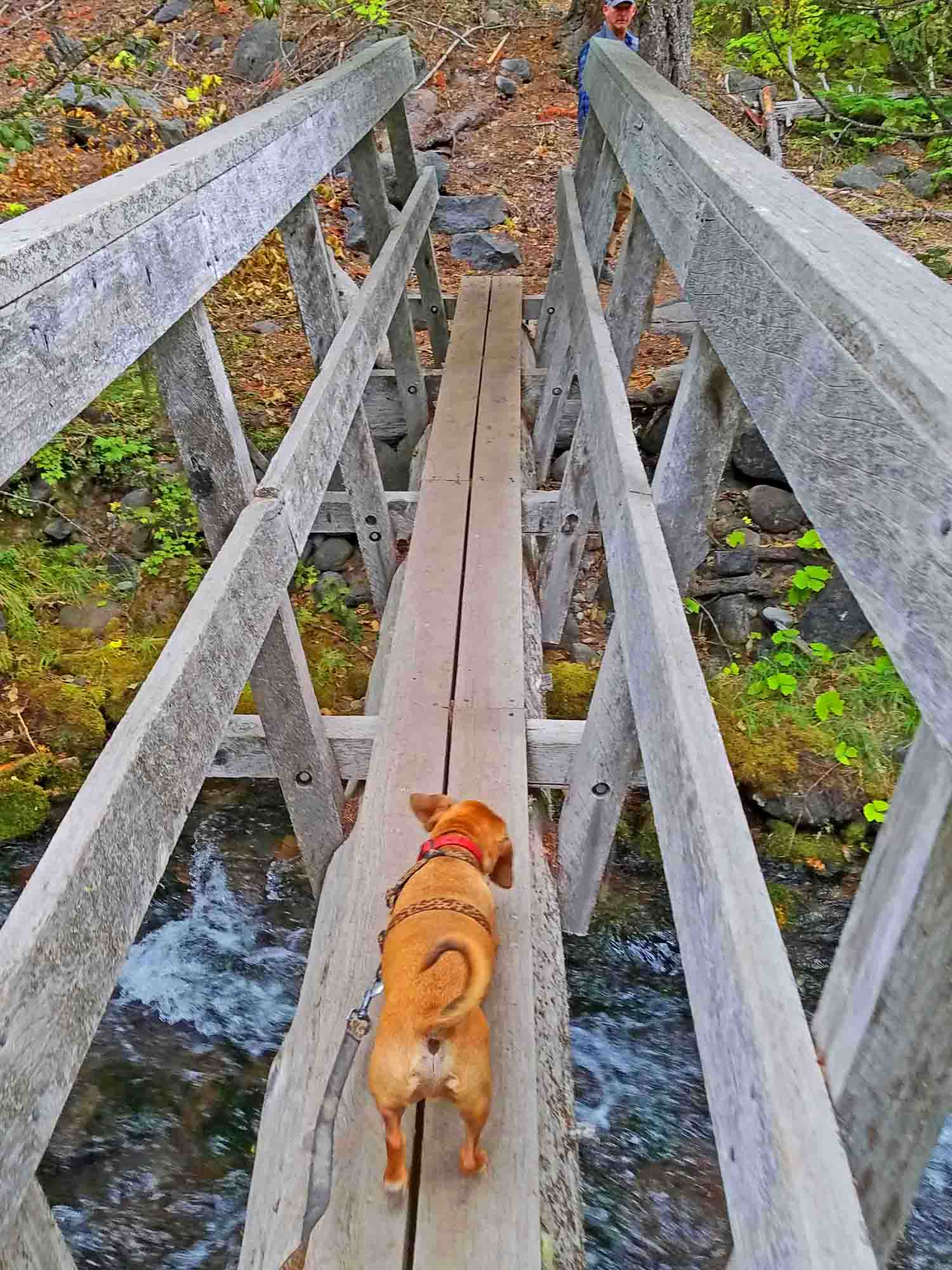 Brave little dog walks the plank.  Photo: (c) Barb Ayers, DogDiary.org