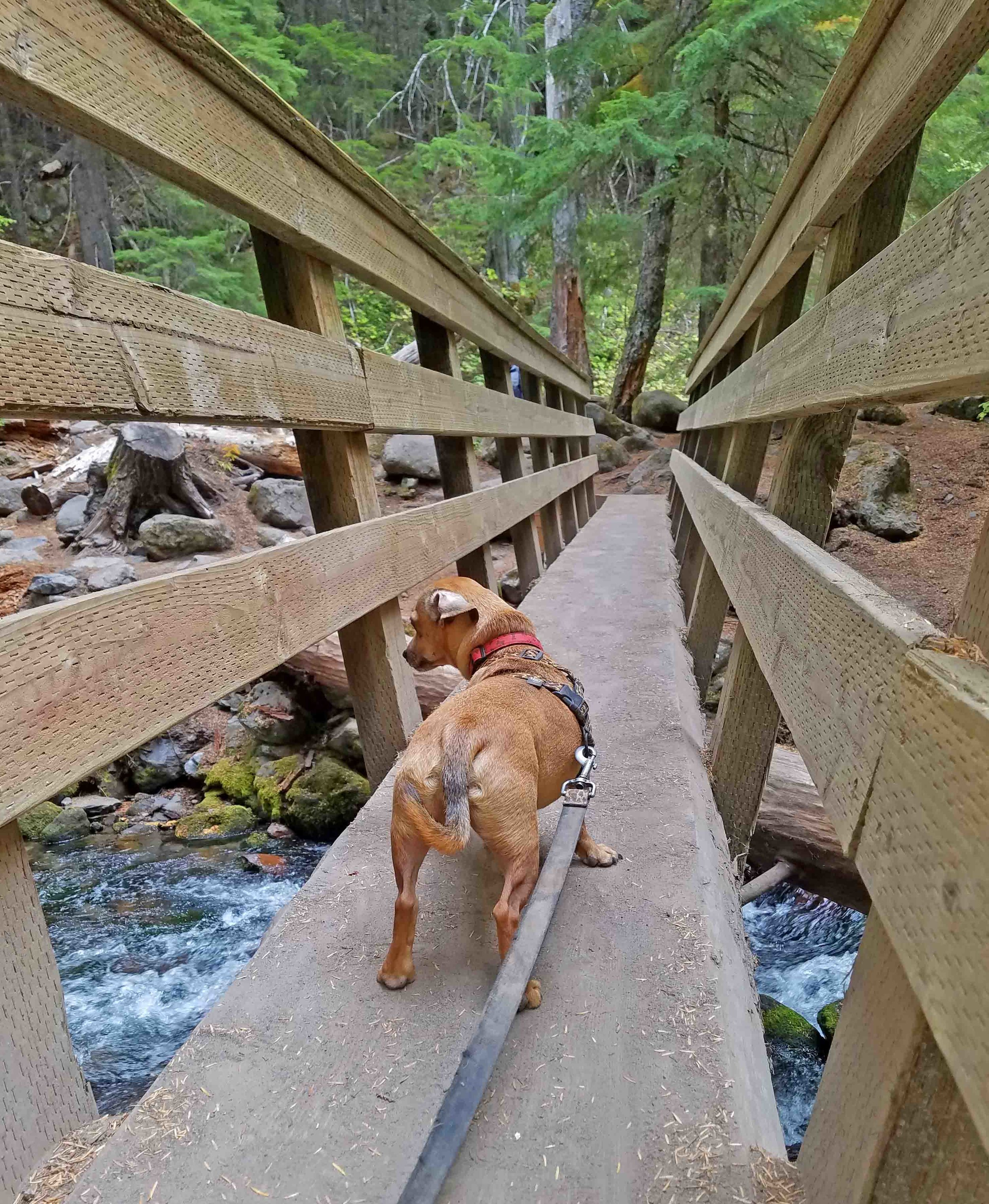 OOPS! Doodle takes a look. It's no biggie. He's so brave.  Photo: (c) Barb Ayers, DogDiary.org
