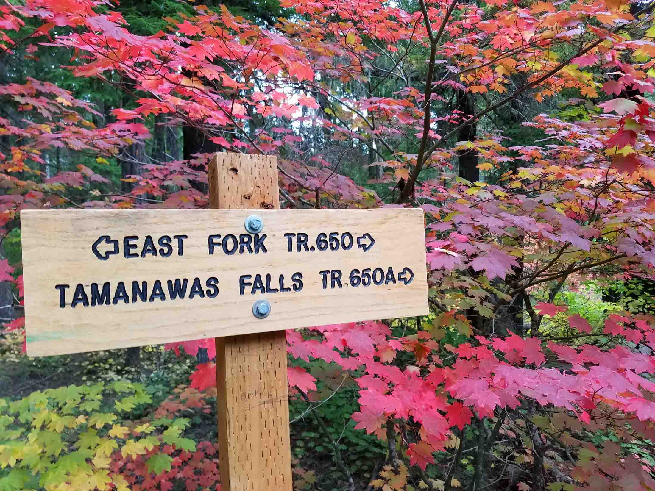 First hints of fall.  Photo: (c) Barb Ayers, DogDiary.org