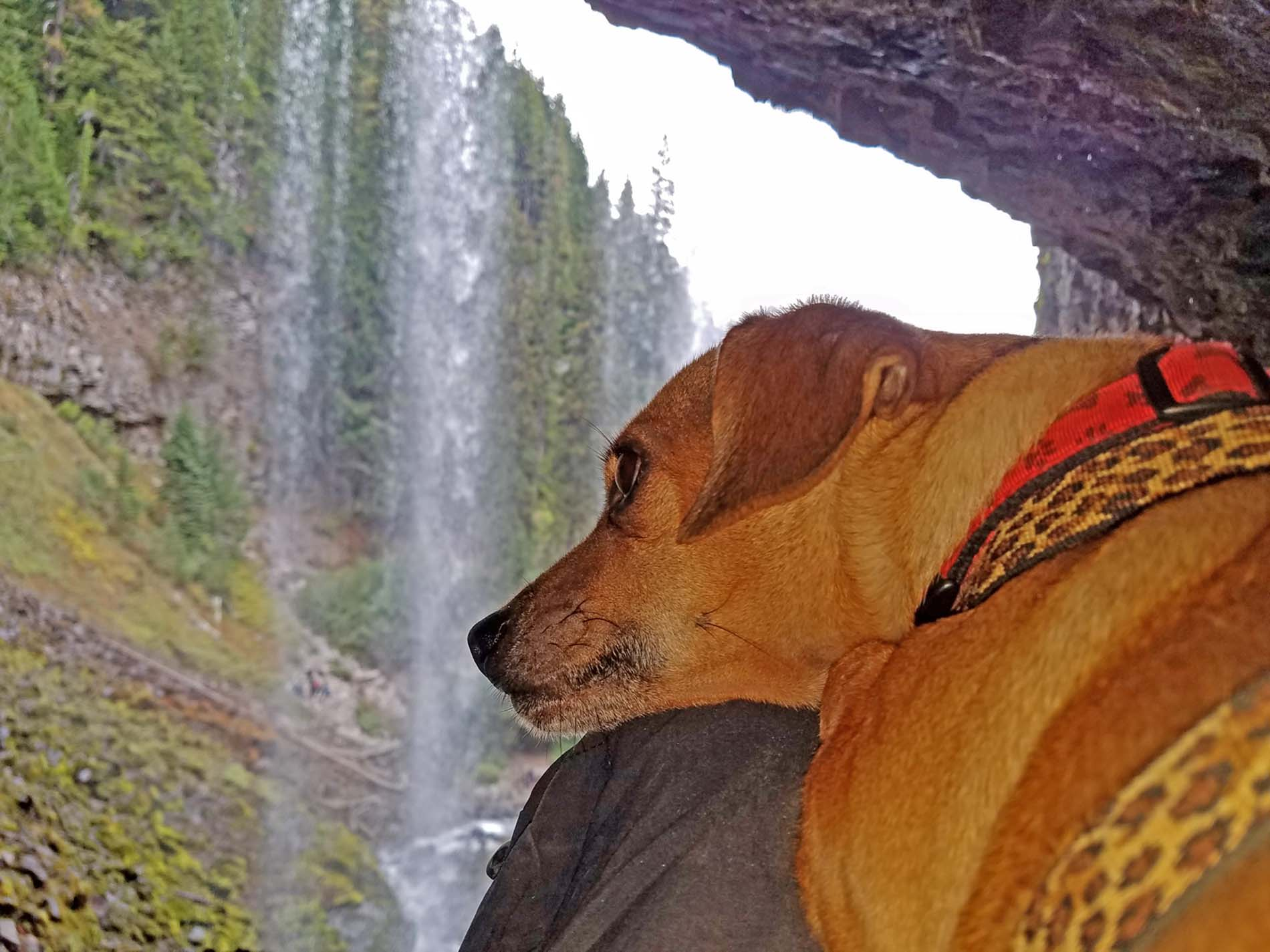 Doodle's deep thoughts on waterfalls . Photo: (c) Barb Ayers, DogDiary.org