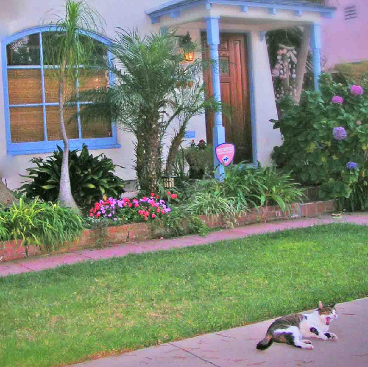Kihei relaxing front yard cropped.jpg