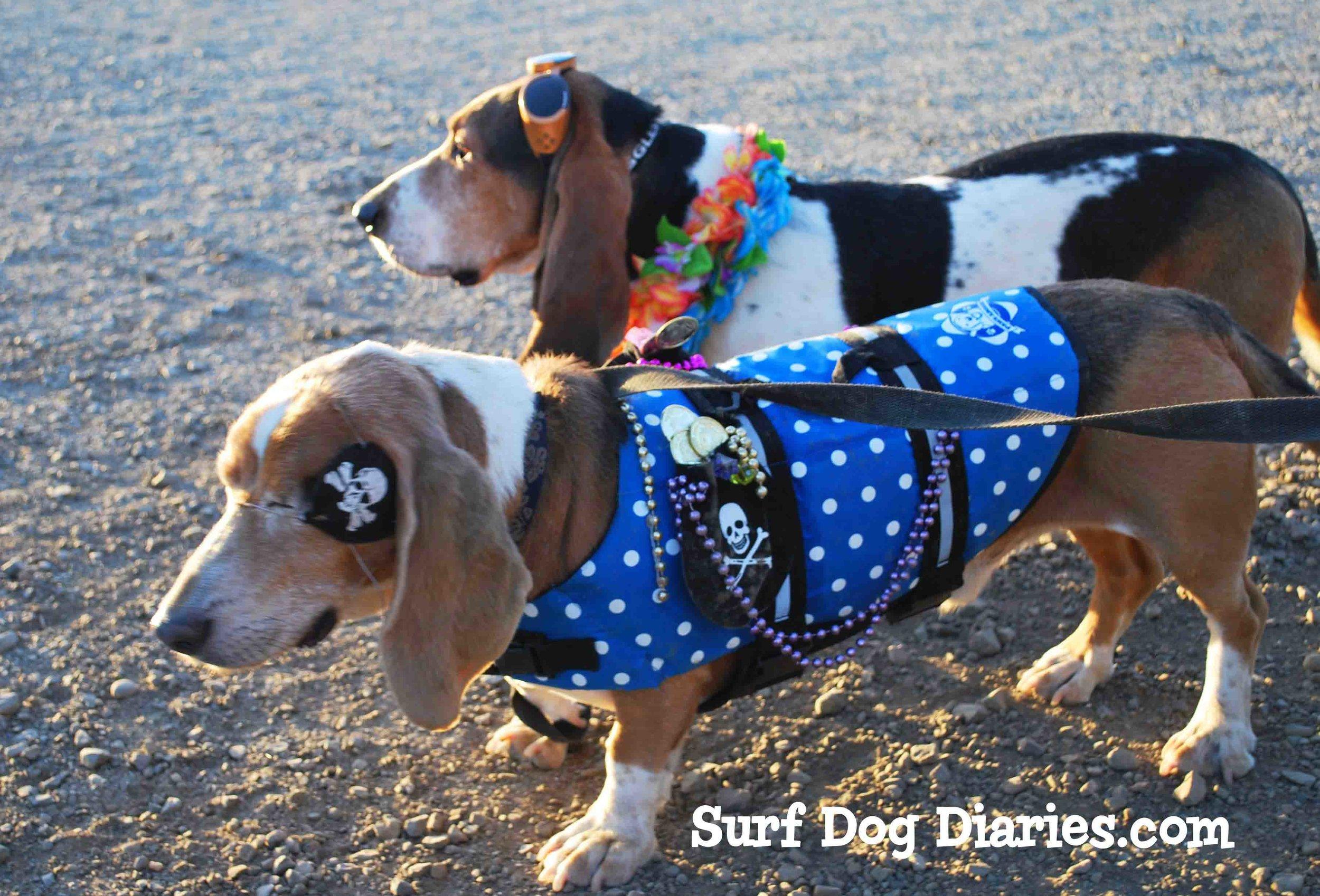 Elvis Dude 2 shot -Surf Dog Diaries Graphic_edited-2.jpg