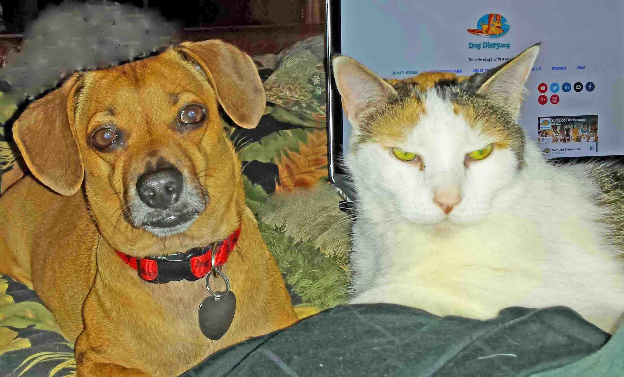 Doodle and Tia, dog and cat writers of  Surf Dog Diaries.  Photo: (c) Barb Ayers, DogDiary.org