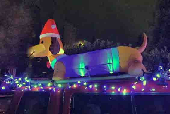 Dasher in this year's parade. Photo: (c) Barb Ayers, DogDiary.org