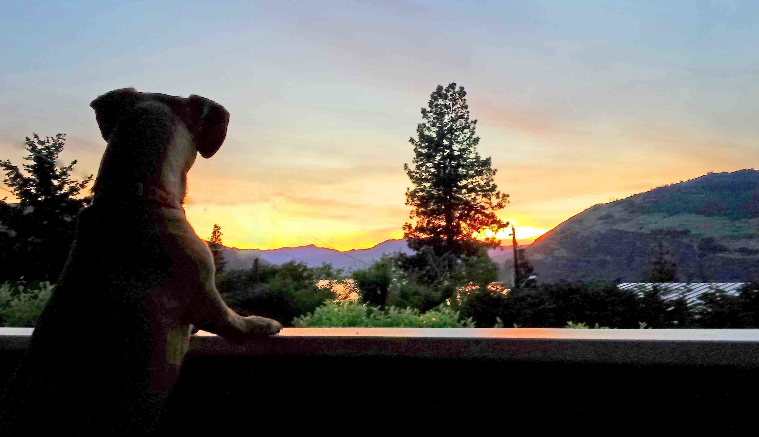 Doodle's deep thoughts over the Columbia River. Photo: (c) Barb Ayers, DogDiary.org