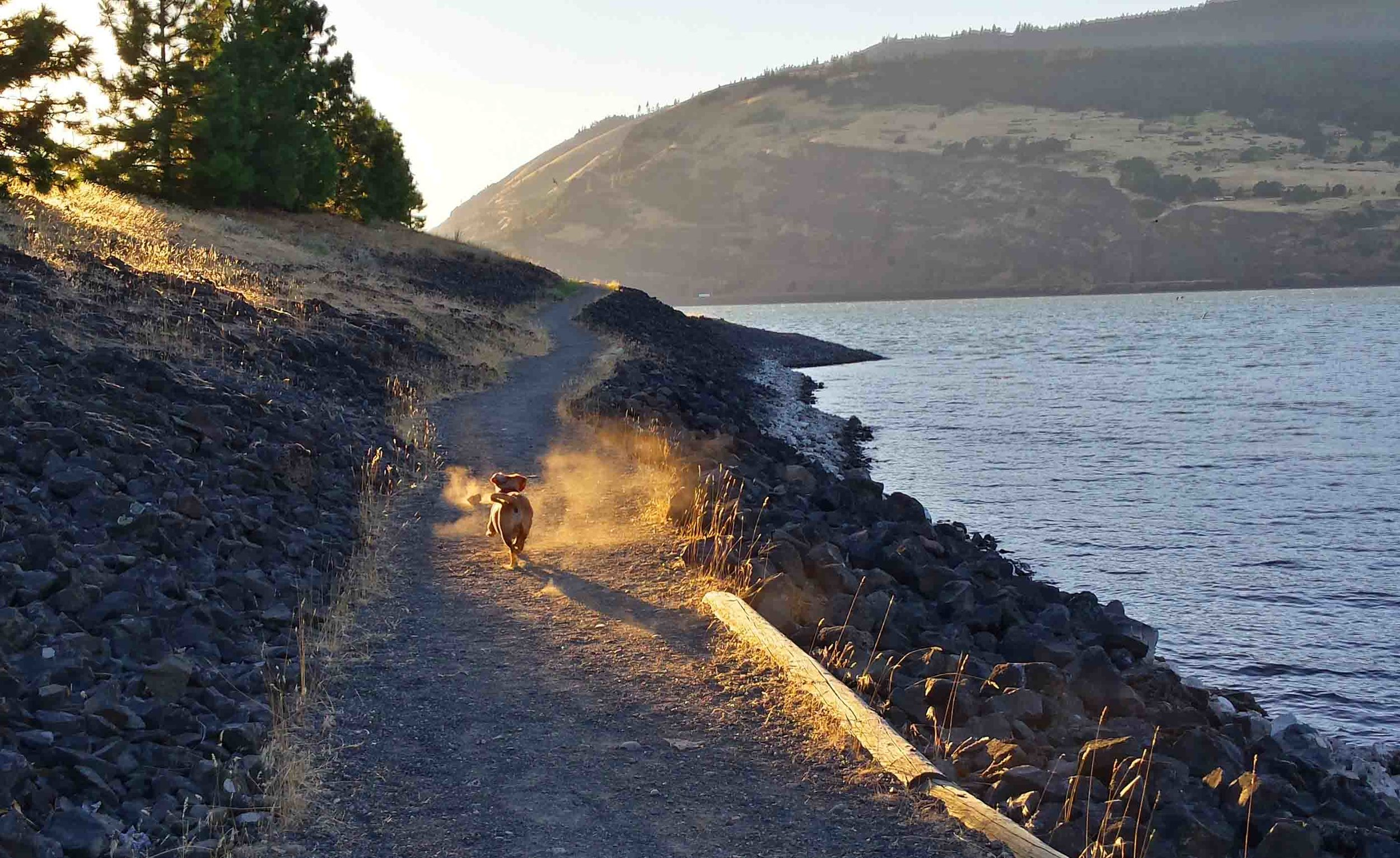 Doodle on our hometown Mosier trail. Photo: (c) Barb Ayers, DogDiary.org