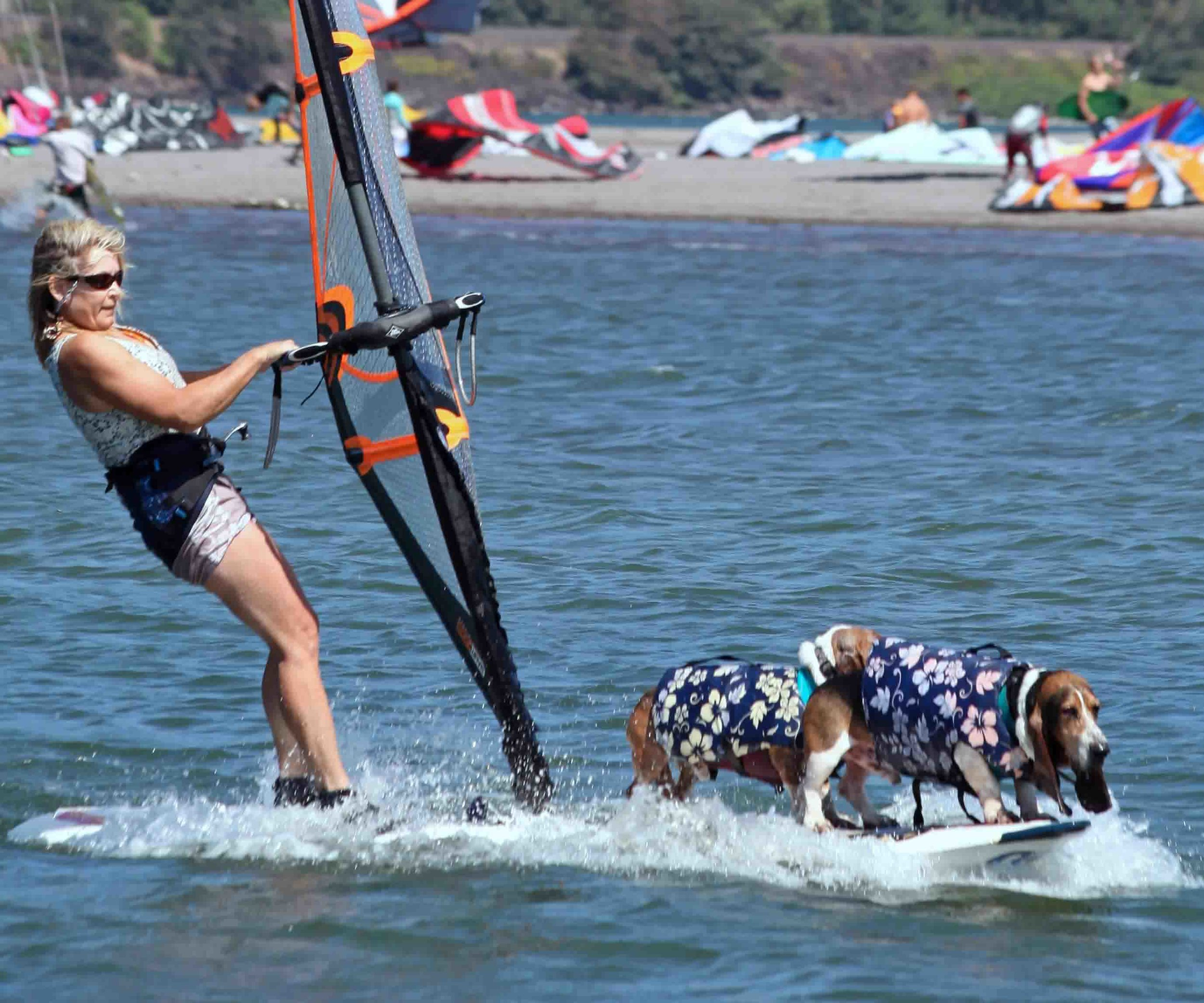 Double dog windsurf day. Elvis, Dude and I at Hood River Event Site, circa 2009. Photo: (c) Barb Ayers, DogDiary.org
