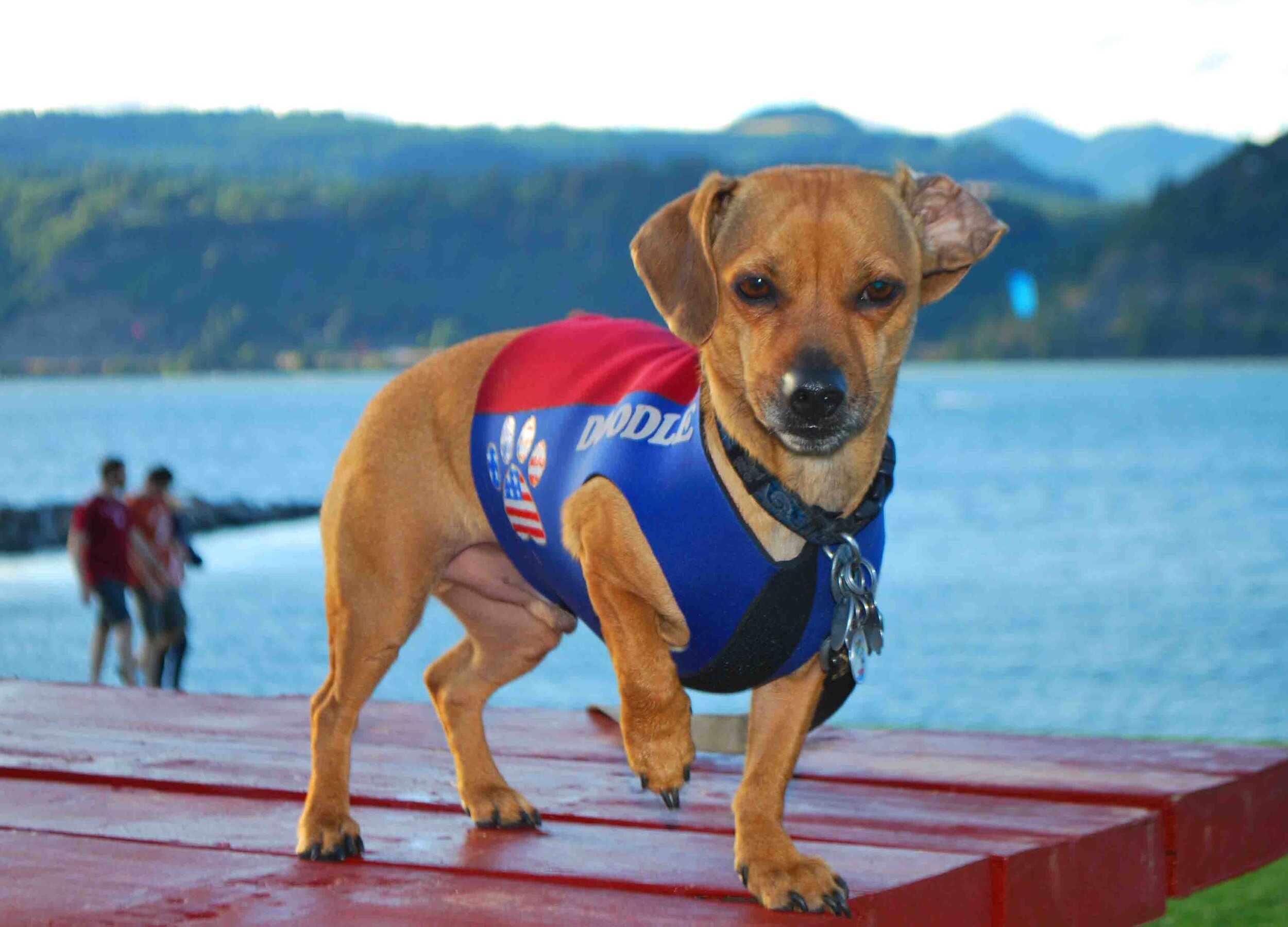 Doodle over the Hood River waterfront. Photo: (c) Barb Ayers, DogDiary.org