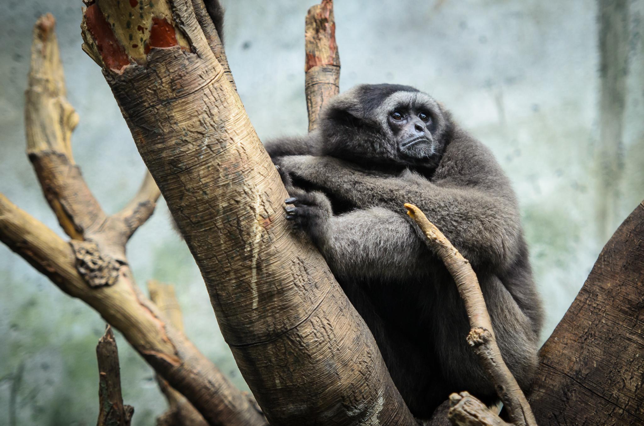Omaha Zoo Visit (4 of 18).jpg