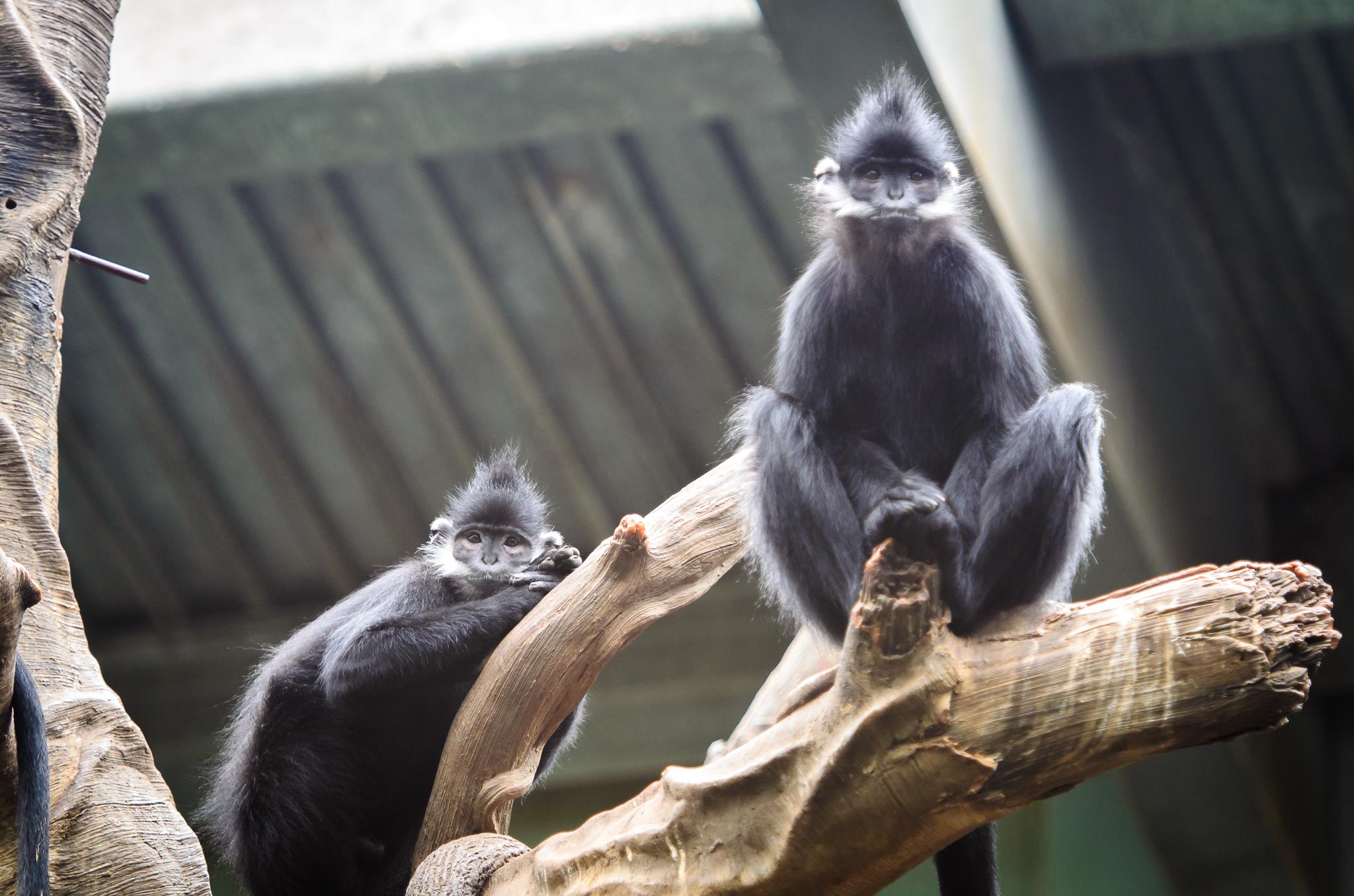 Omaha Zoo Visit (6 of 18).jpg