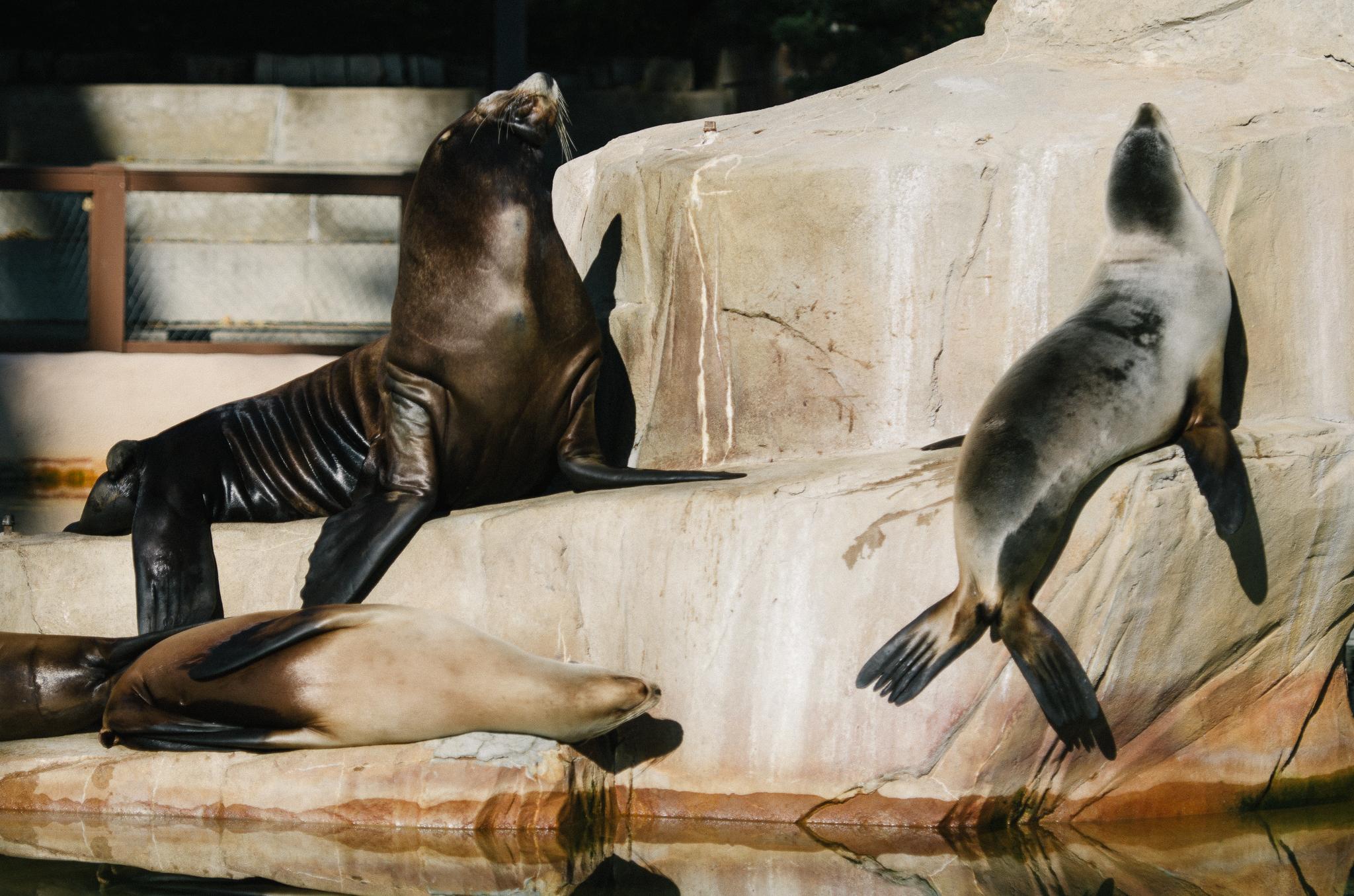 Omaha Zoo Visit (13 of 18).jpg