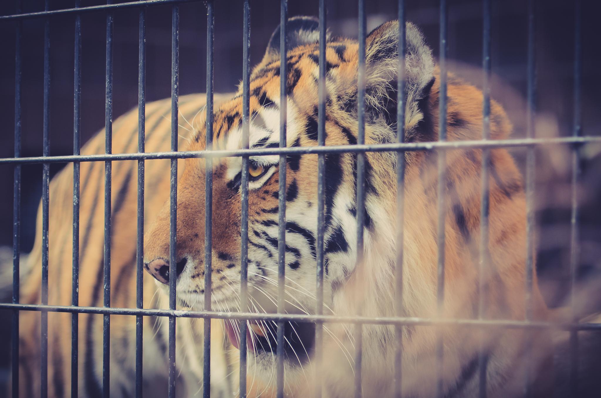 Omaha Zoo Visit (16 of 18).jpg