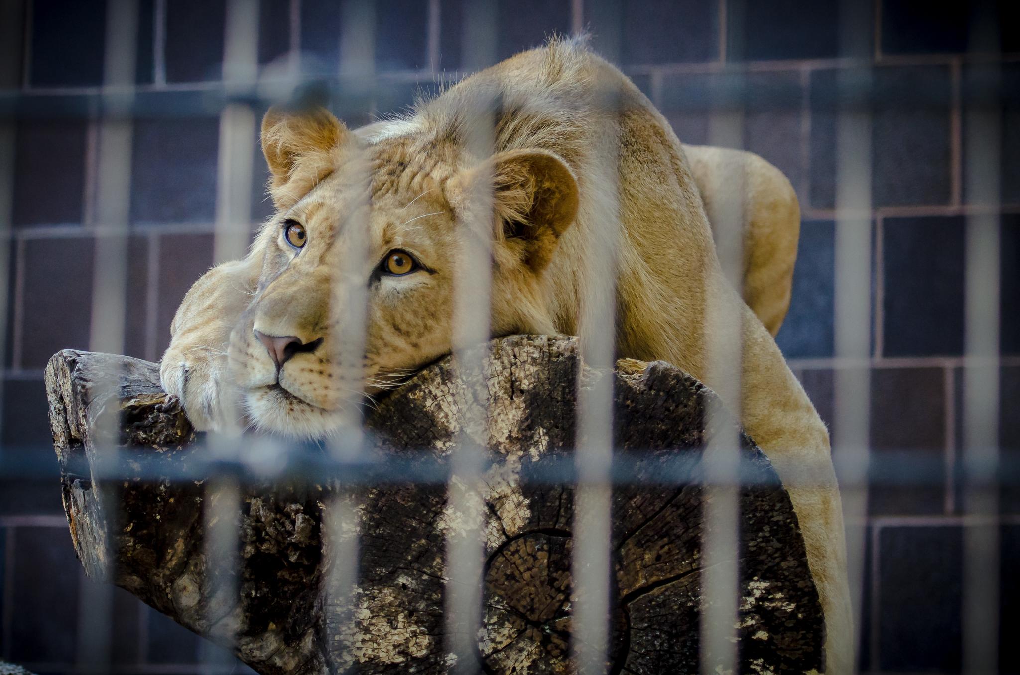 Omaha Zoo Visit (17 of 18).jpg