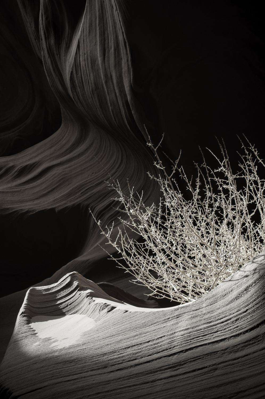 AntelopeCyn-186.jpg