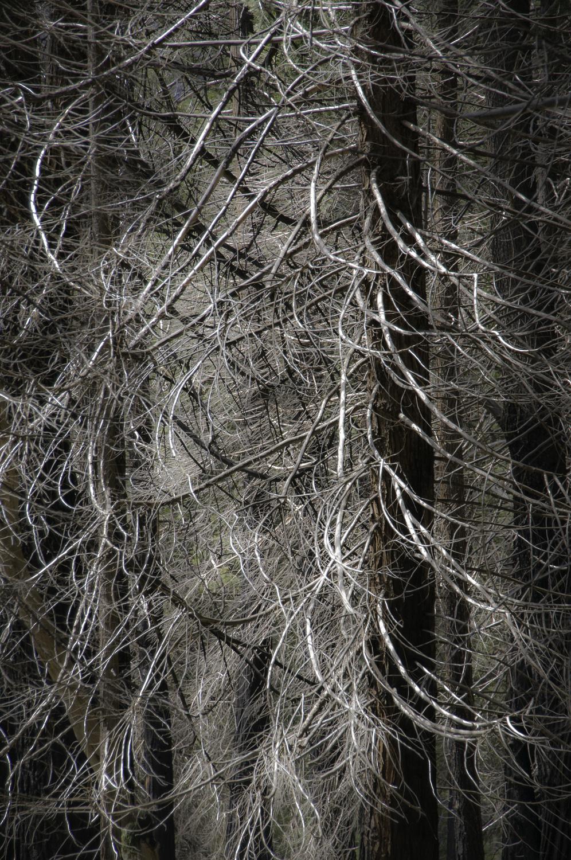 Yosemite_2011-2155.jpg