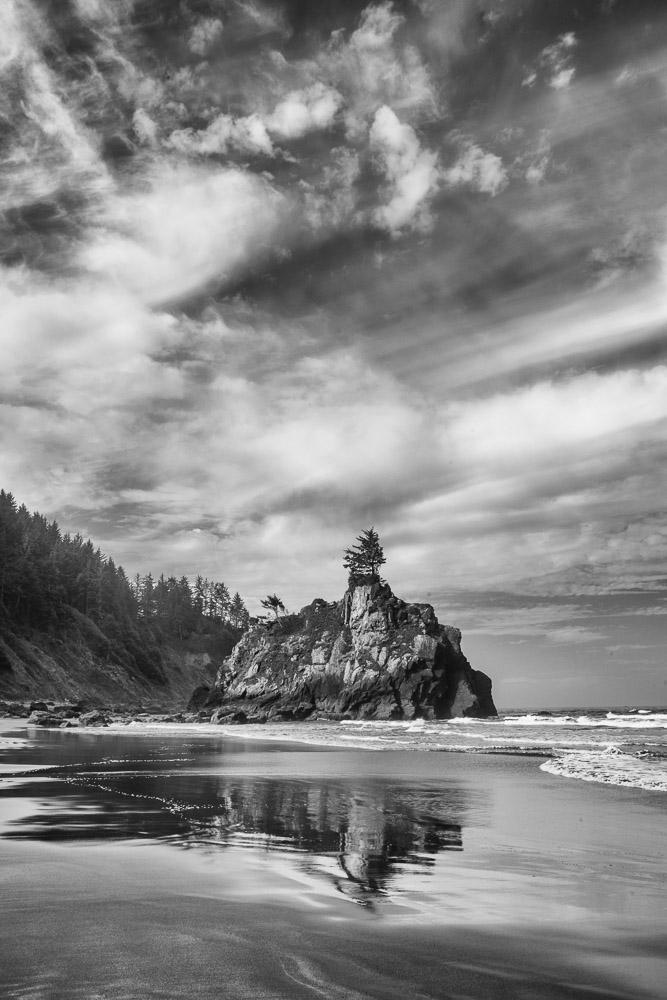 Redwoods-511-Edit.jpg