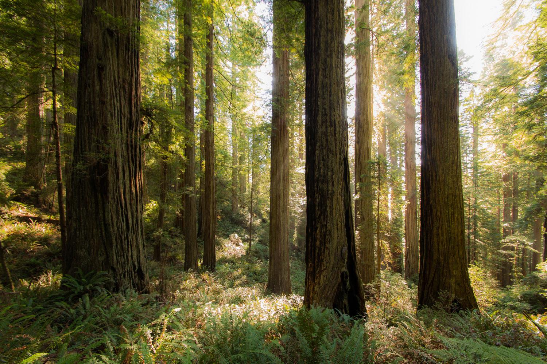 Redwoods-253.jpg