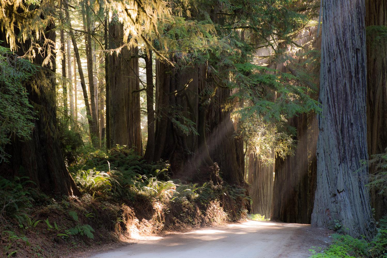 Redwoods-283.jpg