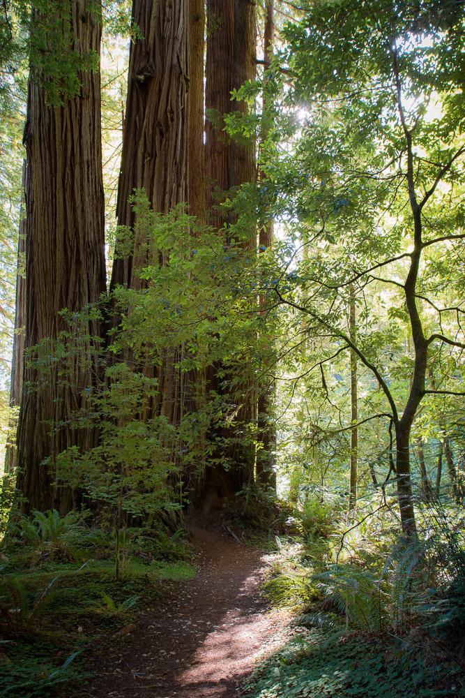 Redwoods-319.jpg