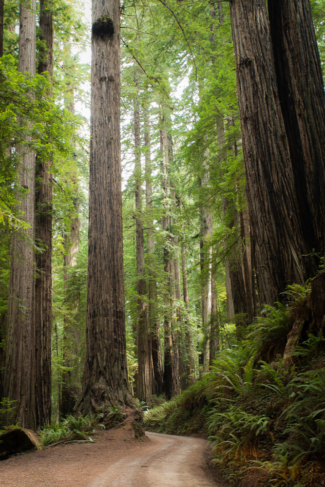 Redwoods-555.jpg