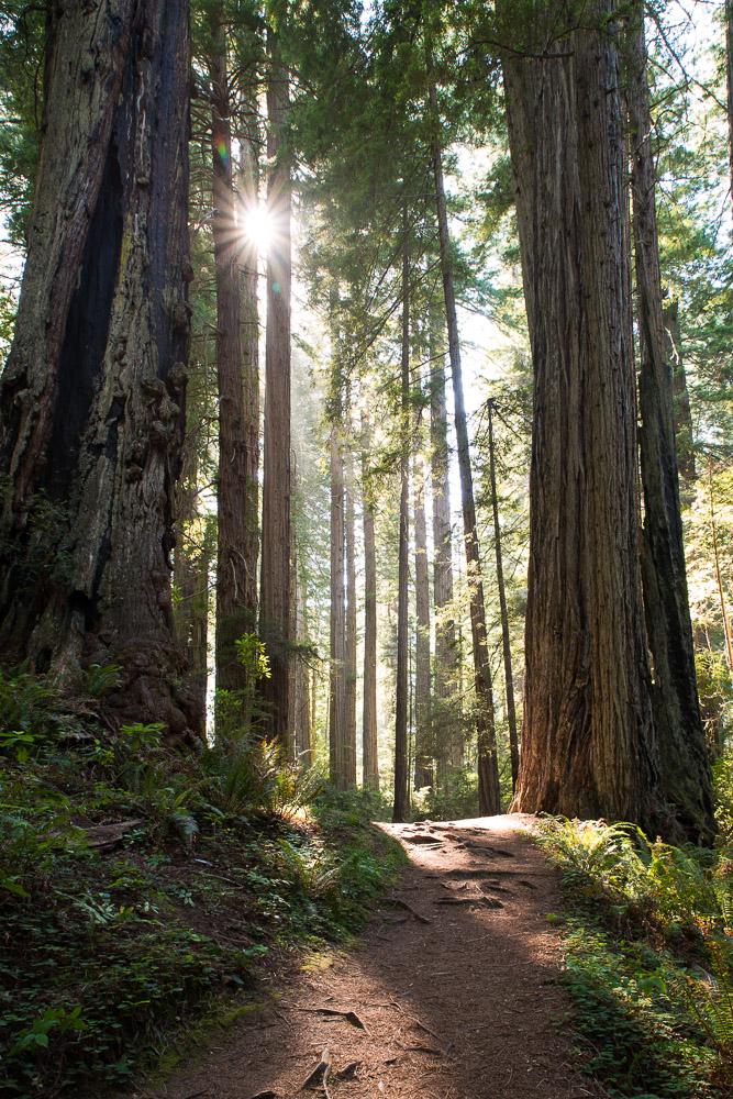 Redwoods-200.jpg