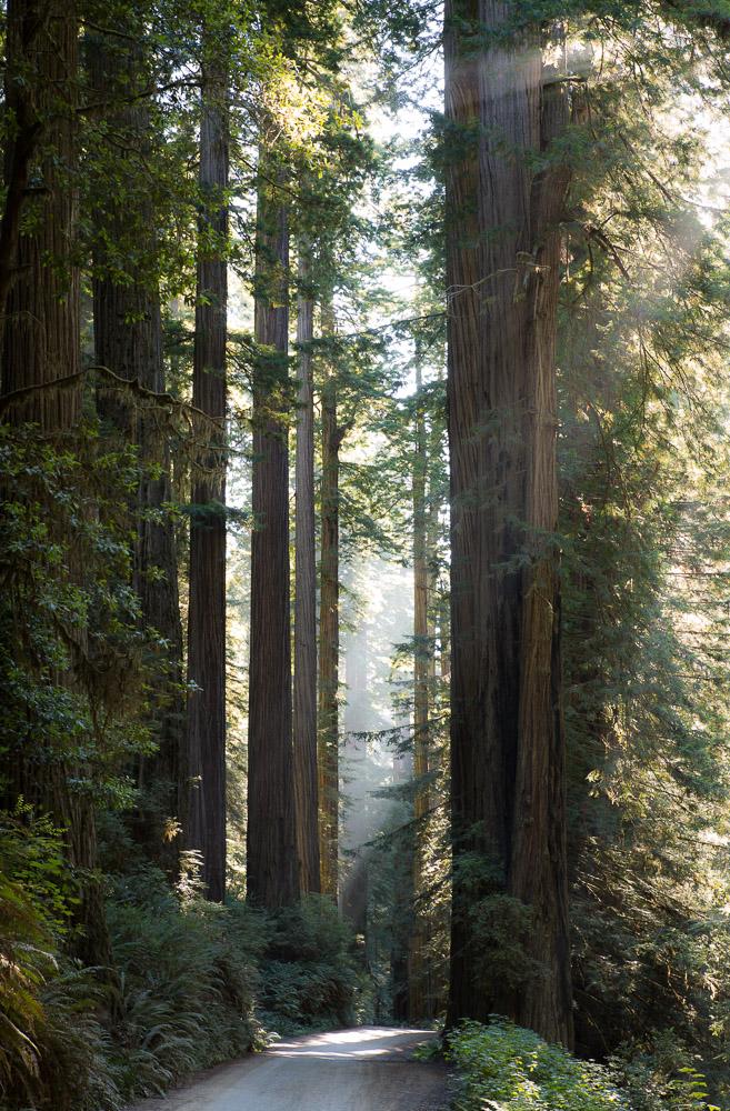 Redwoods-290.jpg