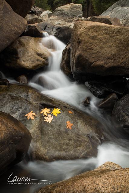 Yosemite 2014-356_wmk.jpg
