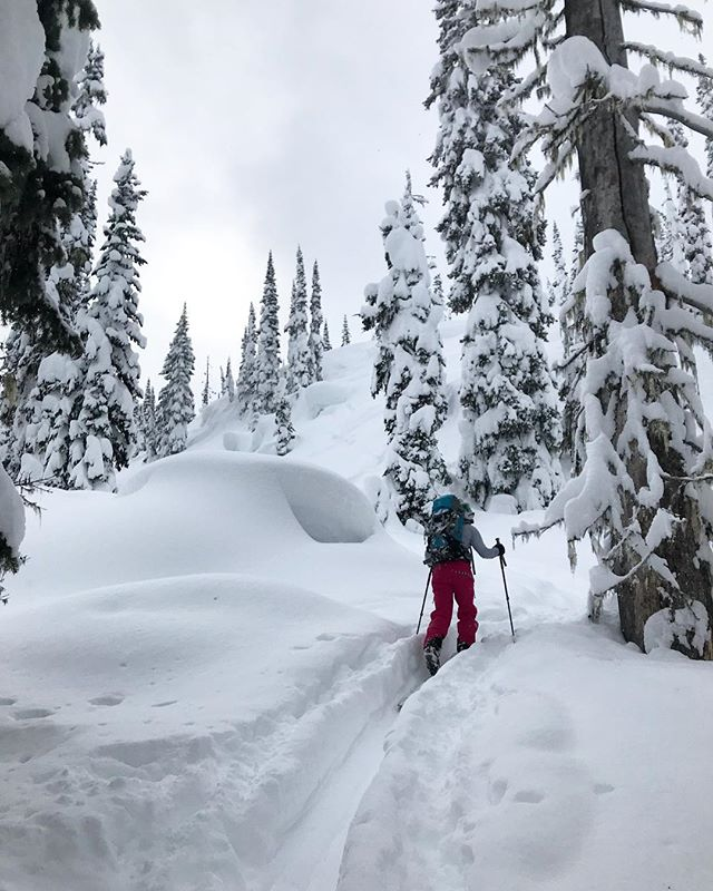 So nice to walk around in the woods again and that Monashee snow is deeeeeep! Surprise pow day with buds! @meghankellyteles • • • • #lifewelllived #explorebc #therealstoke #powday #deepdays #powder #snow #winter #ski #skiing #backcountry #skitouring #mountains #pillows #goodtimes #adventure #hitcase