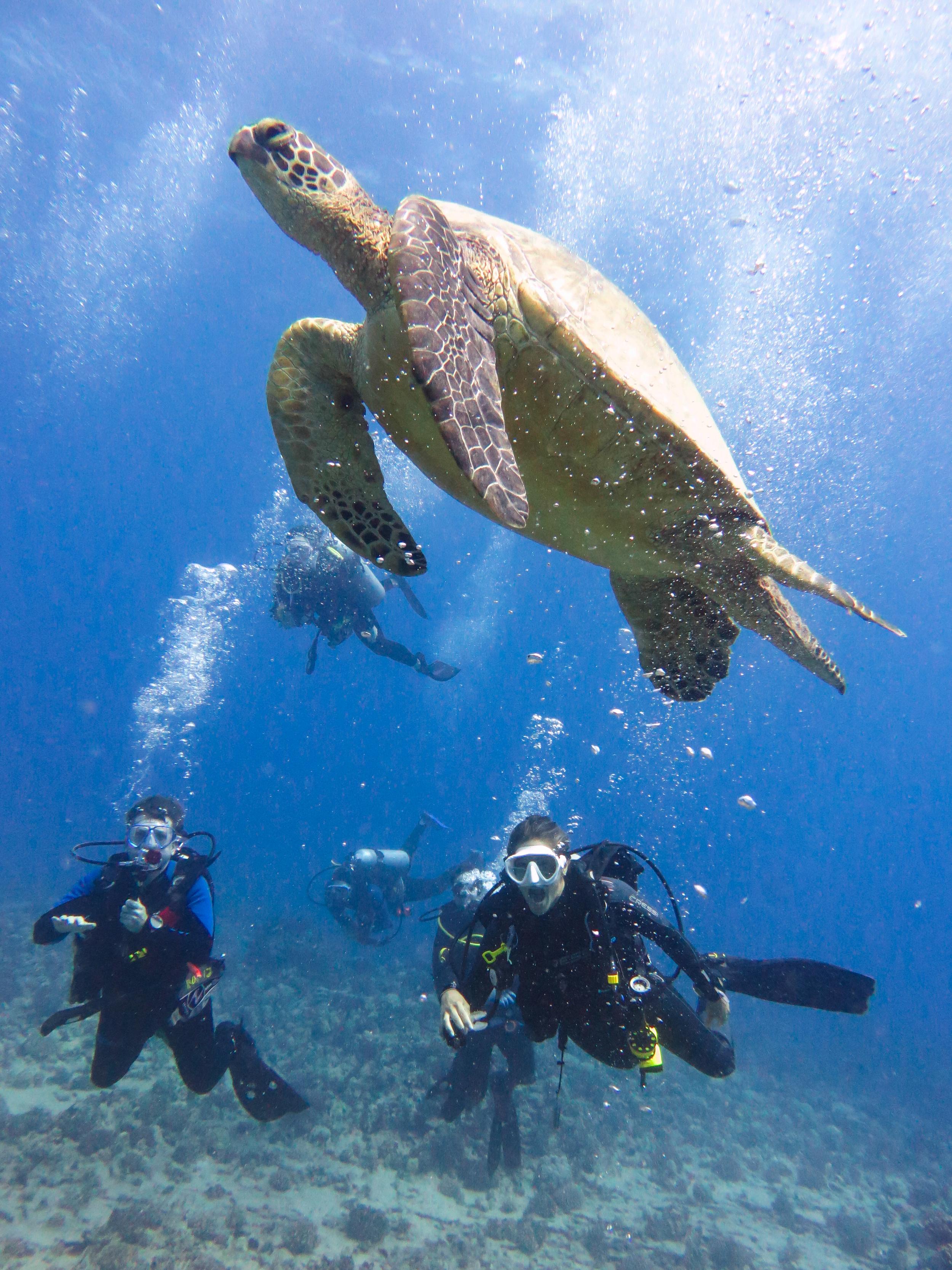 Turtles Sightings Guaranteed!