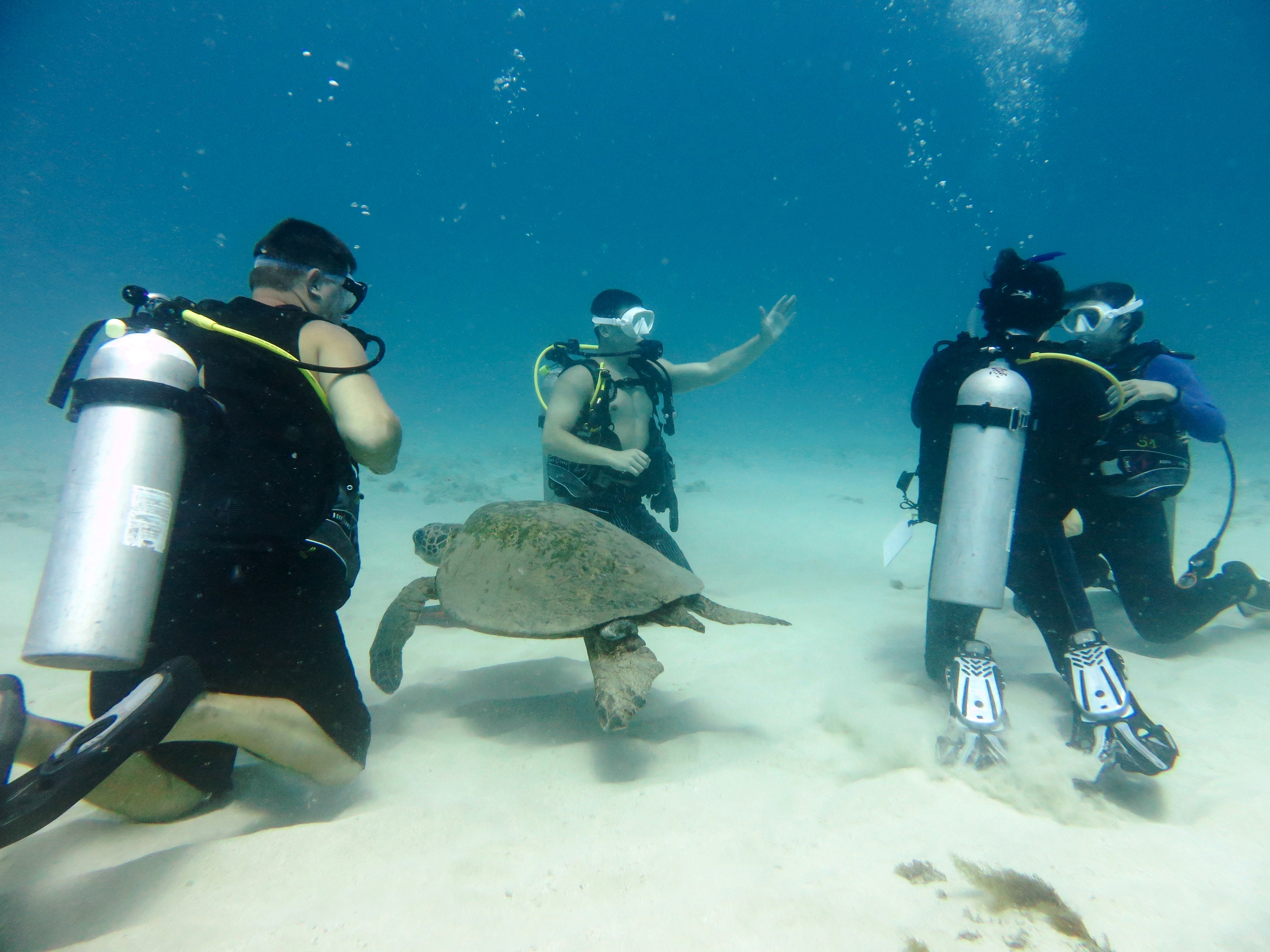 While we were meeting up on the sandy bottom, this turtle decided to join us!