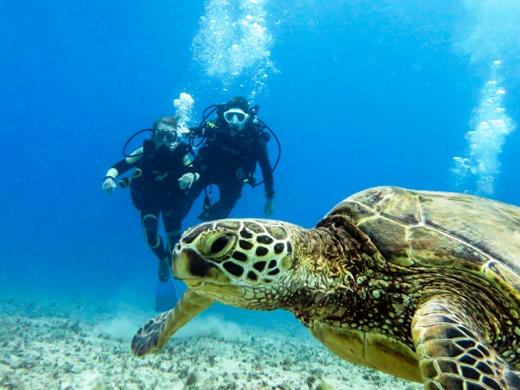 Turtles Guaranteed!