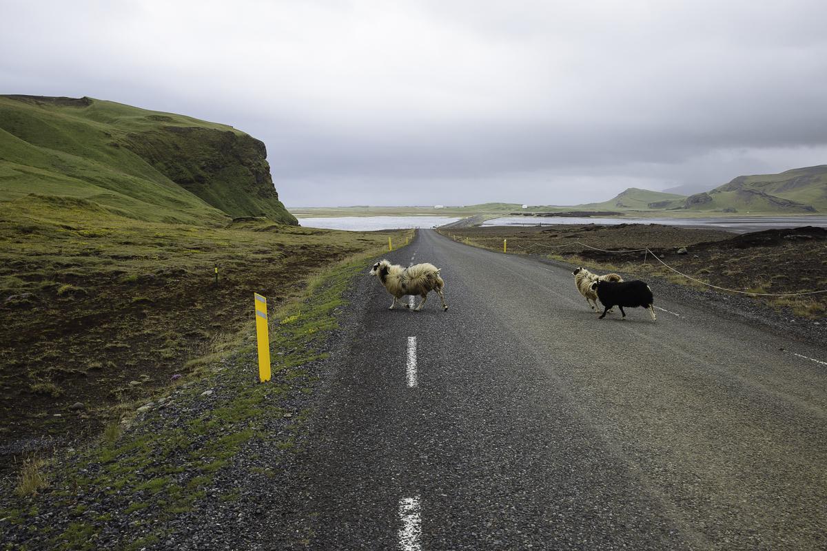 SaraKerens_Iceland-6351.jpg