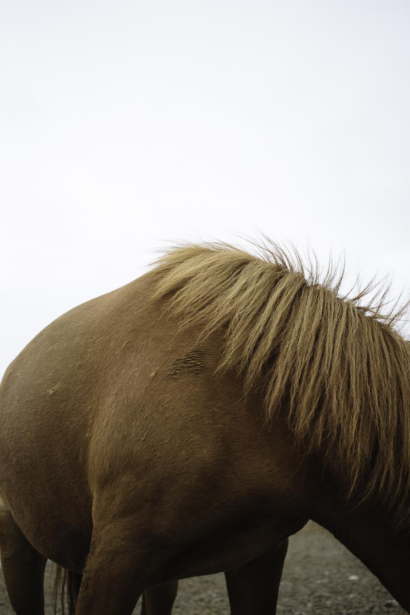 SaraKerens_Iceland-6438.jpg