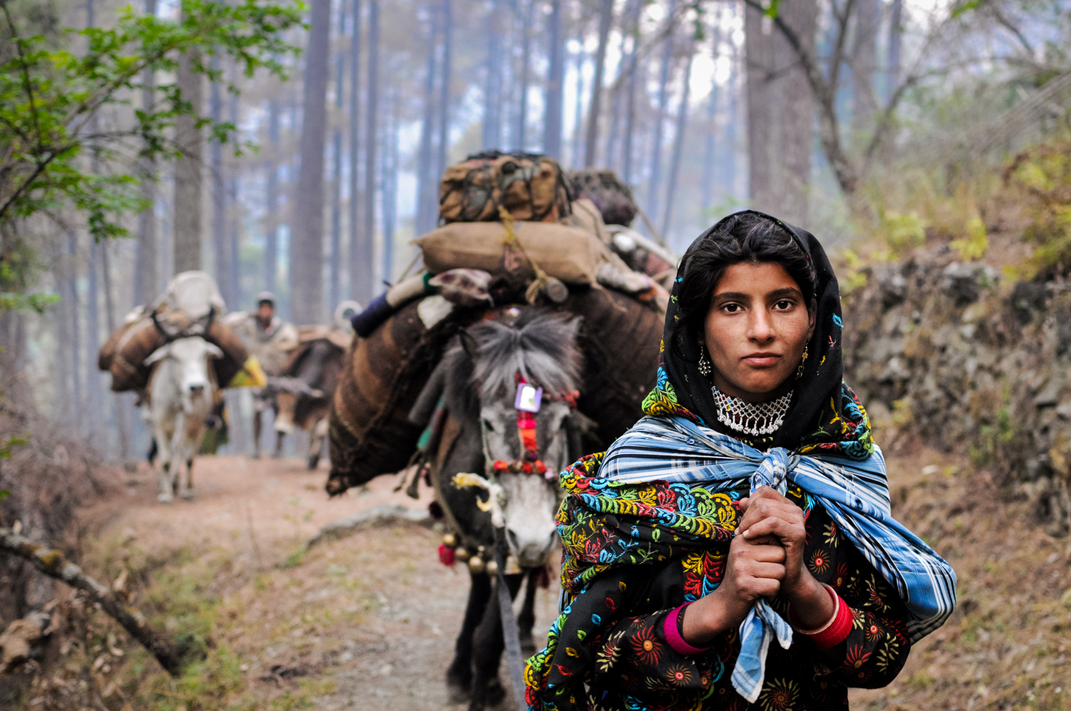 Seventeen-year-old Mariam leads her family's caravan through the foothills of the Himalayas, on the route to the alternate meadow. She's carrying her 2-year-old niece in the plaid shawl slung over her shoulders.