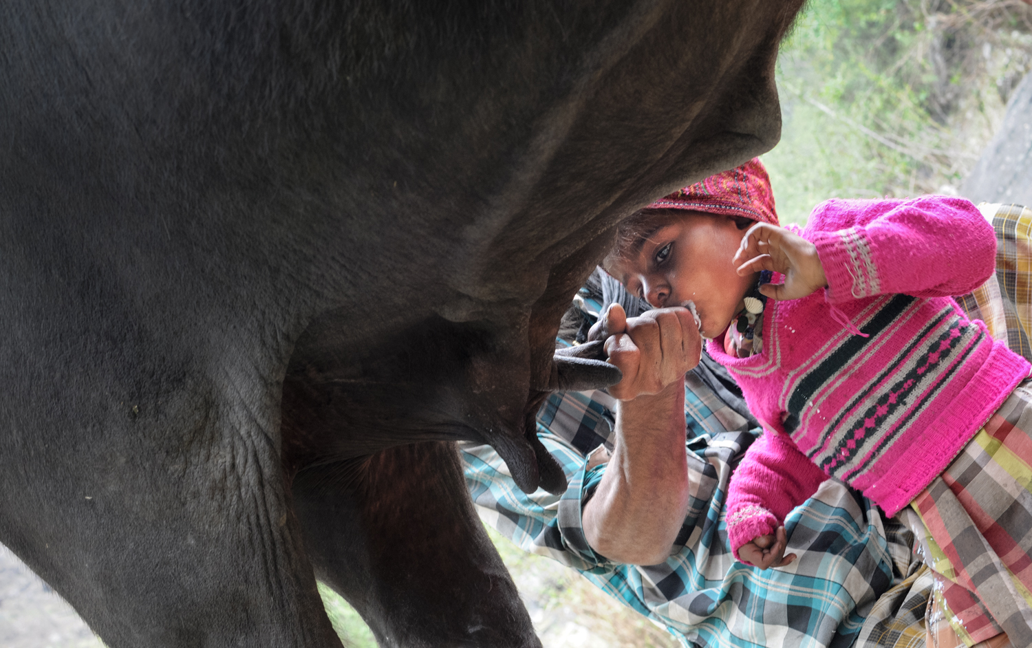 Four-year-old Karim gets his milk straight from the source.