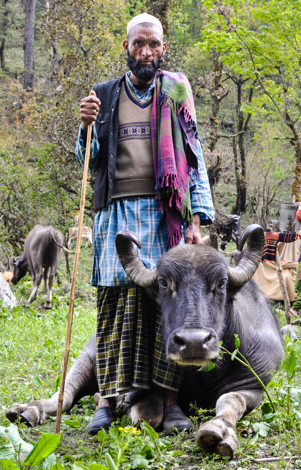 Dhumman, the father of the family, with his favorite buffalo. This was the first summer in his entire life that he would not spend at his family's ancestral meadows. He was at once accepting and resentful, and had deep concerns about what this meant for the fate of the migration in future years.