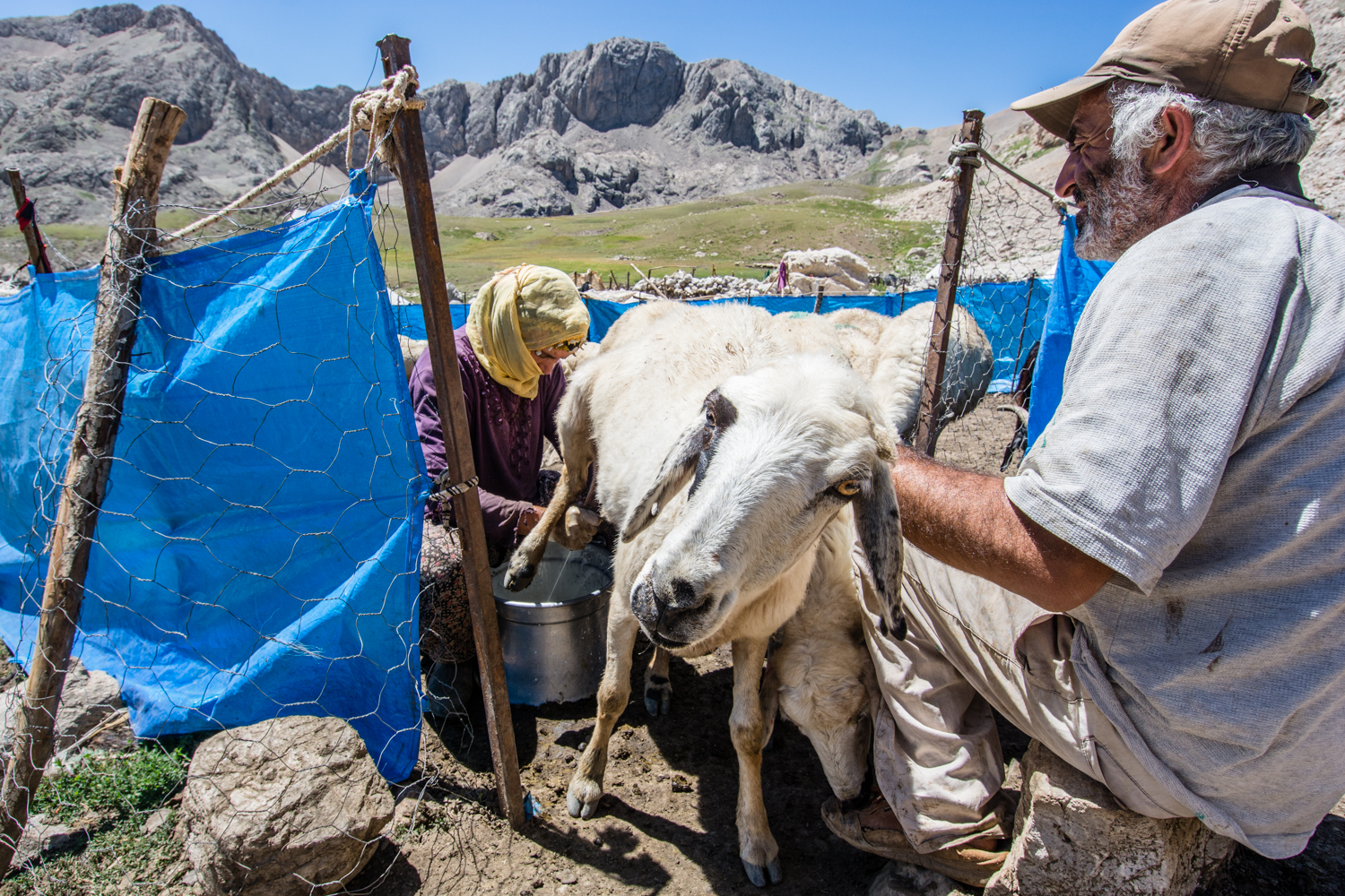 In addition to seeking fresh, free fodder for their flocks, the cool alpine climate is perfect for producing top quality tulum peynir, a hard cheese that sells for about $30 per pound.