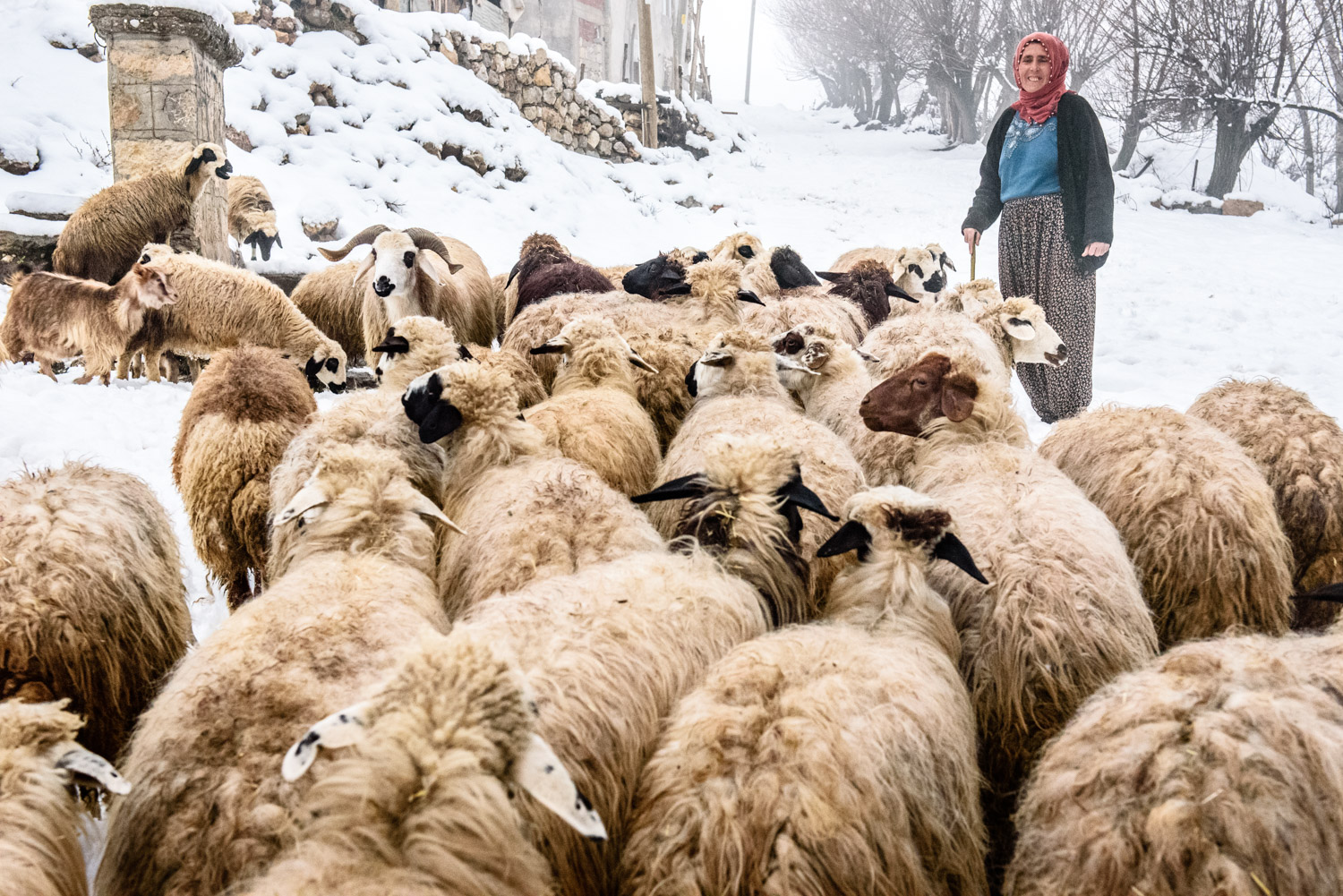 Here, sheep are being led to drink at the springs in a small village in the Munzur Valley.