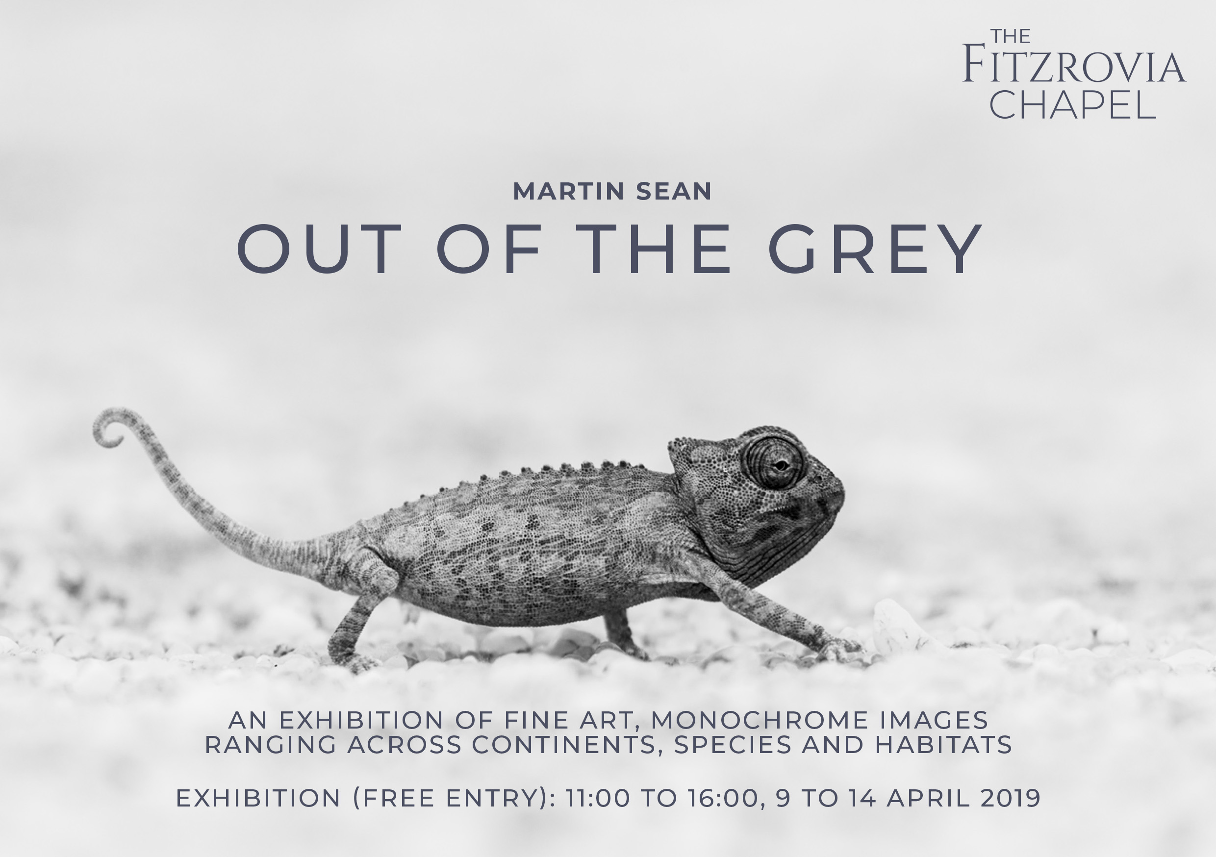 Out of the Grey focuses on large-scale black and white images from across continents, species and habitats.