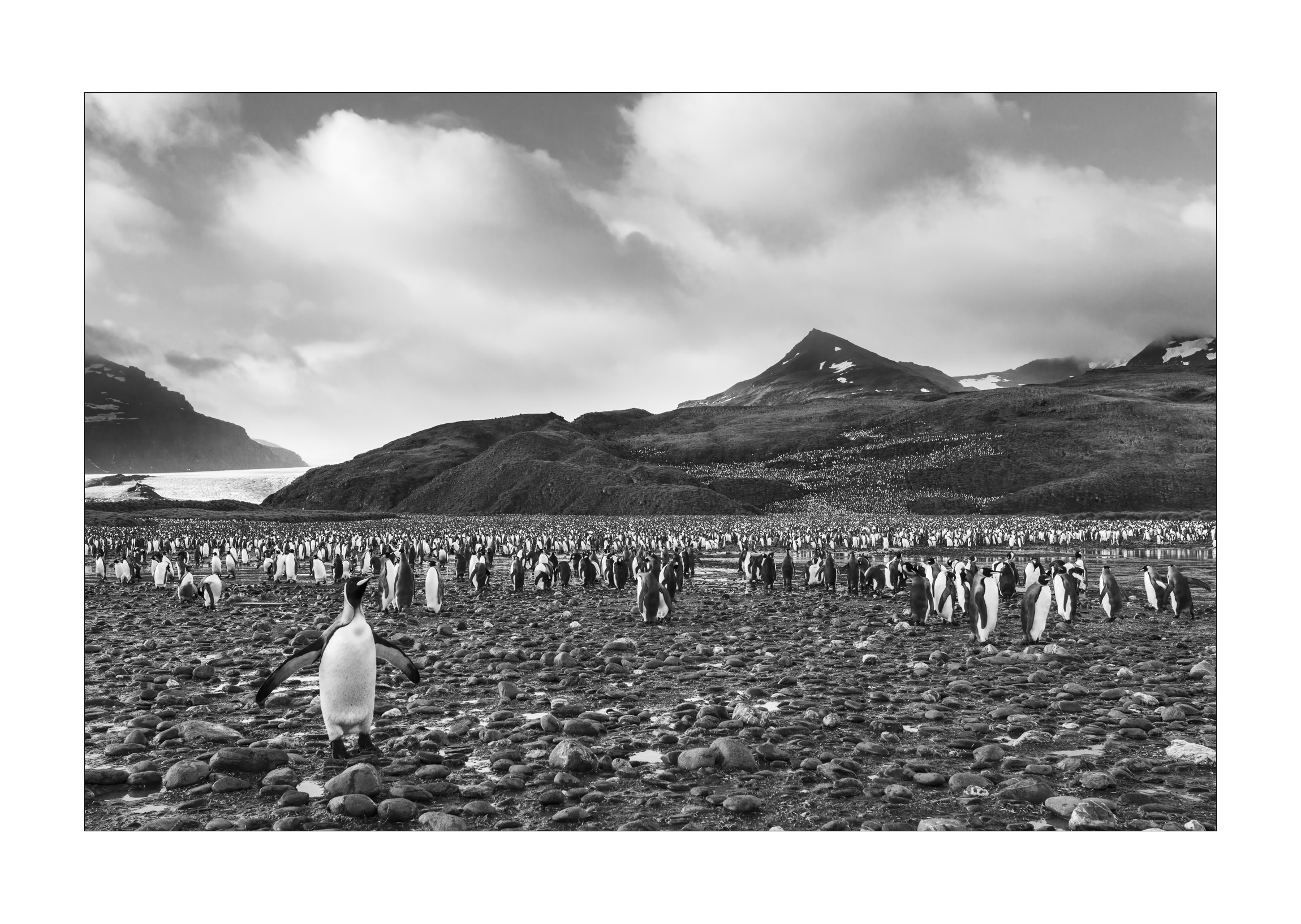 King penguins  (Aptenodytes patagonicus)  - Salisbury Plain, South Georgia  The feeling of being among hundreds of thousands of penguins is an experience that will remain with me forever. The penguins, individually small yet collectively immense, balance the accompanying landscape of mountains, glaciers and an incoming storm. Penguins are naturally inquisitive. As the one in the foreground approached and separated itself from the crowd, I knew instinctively that it would complement the shot.