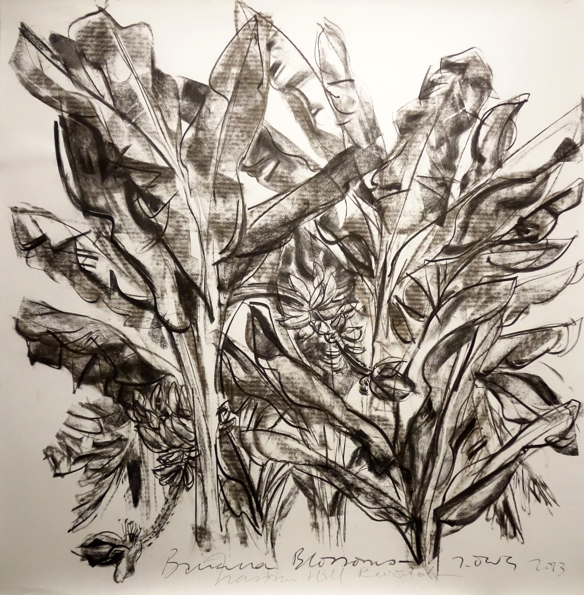 Banana Blossoms   2013 Charcoal on paper approx. H117 x W117 cm